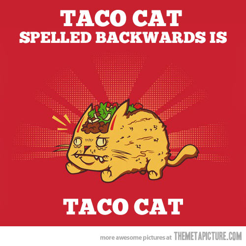 funny-taco-cat-toppings-clipart