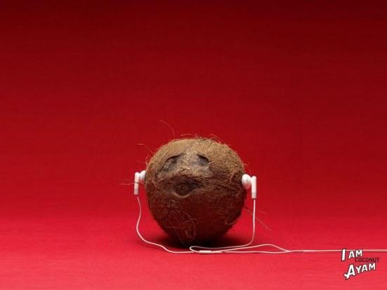funny-coconut-wallpaper-2005225141