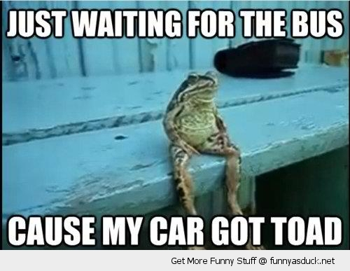 funny-waiting-on-bus-toad-pics