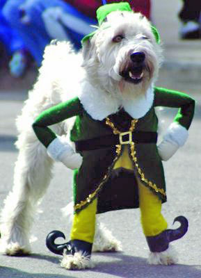 st-patricks-day-dog