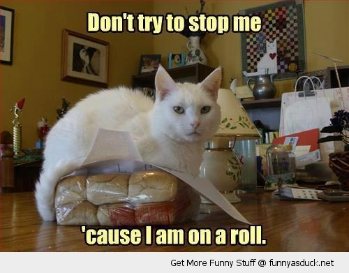 funny-on-a-roll-cat-bread-pun-pics