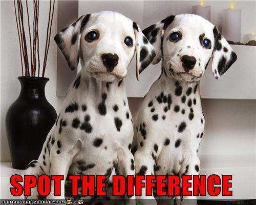 Funny-Similarities-Spot-The-Difference-10