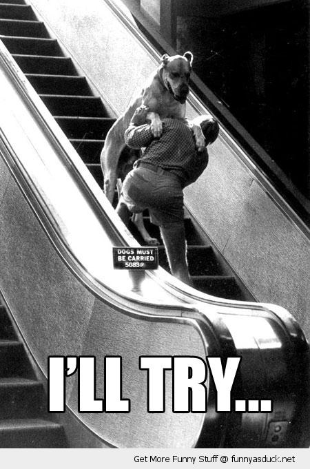 funny-carry-dog-ill-try-escalator-pics