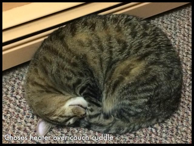 heater kitty