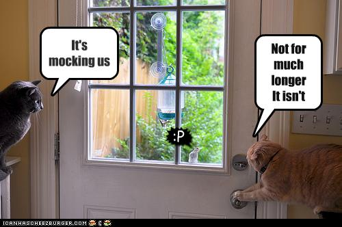 lolcat_mocking_us