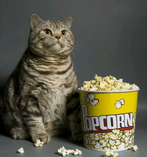 popcorn cat