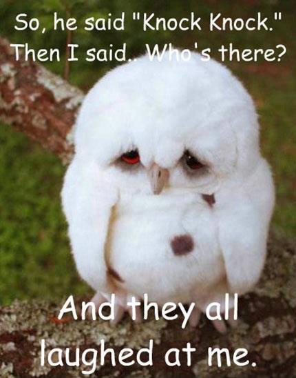 knock-knock-owl