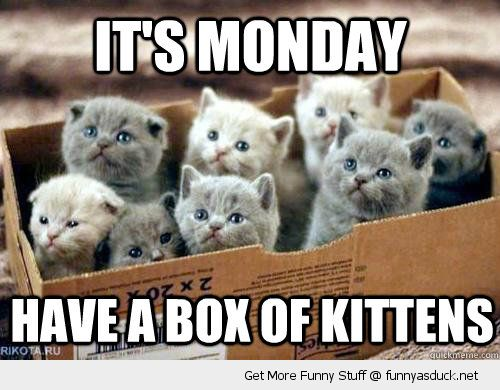 funny-cute-cats-monday-box-of-kittens-pics