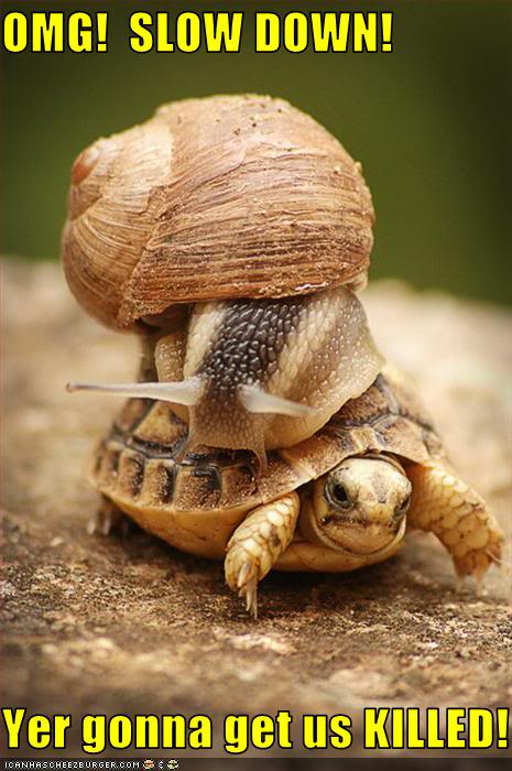 slow-down-turtle