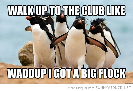 funny-penguins-walk-up-to-the-club-got-big-flock-thrift-shop-pics